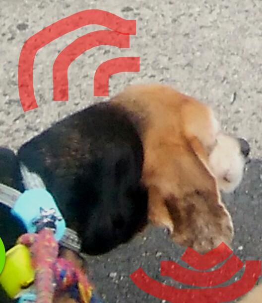IMG 20190609 194858 - 犬の病気 耳血腫