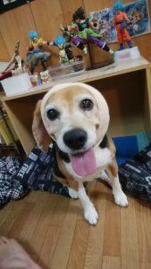 line 1559989092763 169x300 - 犬の耳血腫に「冷やす」はダメ!3回経験した全記録!